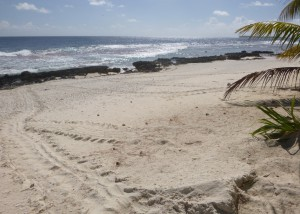 Sea turtle nesting on remote atoll - no humans, no lights, no disturbance